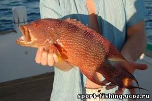 прогноз рыбалки шексна